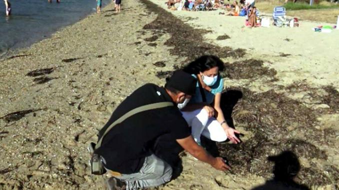 Reducir recollida algas impide erosión praias