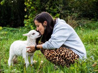 Os 250 animais acollidos no Santuario Vacaloura poden quedar sen fogar