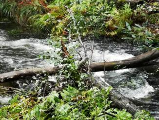 PSdG Limpeza dos ríos A Nova Peneira